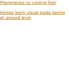 Pheromones to control fear  Horses learn visual tasks better at ground level